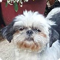 Adopt A Pet :: BETTY BOOP - Smithfield, PA