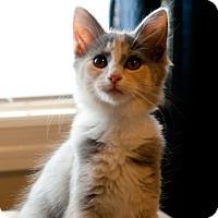 Adopt A Pet :: Elena - Homewood, AL