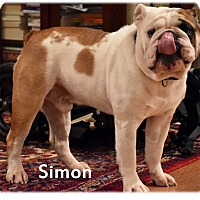 Adopt A Pet :: Simon - Decatur, IL