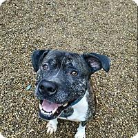 Adopt A Pet :: gus - East McKeesport, PA