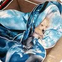 Adopt A Pet :: Wheezy - Tehachapi, CA