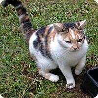 Adopt A Pet :: Lotus - Carthage, NC
