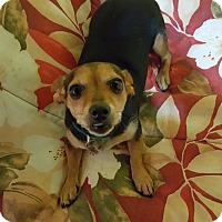 Adopt A Pet :: Priscilla - Huntsville, AL