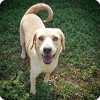 Adopt A Pet :: Molly - Fredericksburg, TX