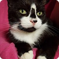 Adopt A Pet :: Lucille - Staten Island, NY
