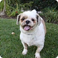 Adopt A Pet :: BUTCH - Newport Beach, CA