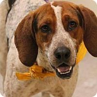Adopt A Pet :: Louie - Lebanon, ME