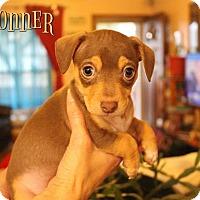 Adopt A Pet :: Donner - Benton, LA