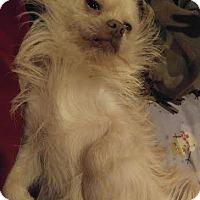 Adopt A Pet :: Prince - East Randolph, VT