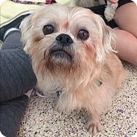 Adopt A Pet :: Griffin - Thousand Oaks, CA