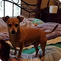 Adopt A Pet :: Buckley - Nixa, MO