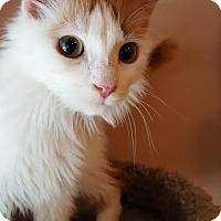 Adopt A Pet :: Zoey - Hazel Park, MI