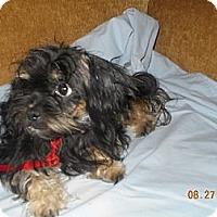 Adopt A Pet :: Gracie - Wellington, OH