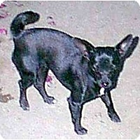 Adopt A Pet :: Suzie - dewey, AZ