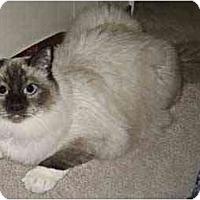 Adopt A Pet :: Lucky - Davis, CA