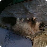 Adopt A Pet :: FRANKIE - Brea, CA