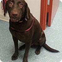 Adopt A Pet :: Danko - Orlando, FL