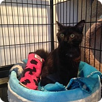 Adopt A Pet :: SIERRA - Huntington Station, NY