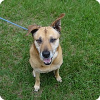 Adopt A Pet :: Hattie - Jupiter, FL