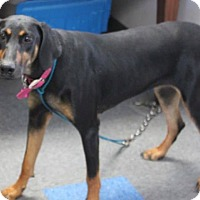 Adopt A Pet :: Gabby - Tracy, CA