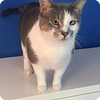 Adopt A Pet :: Misty - Summerville, SC