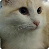 Adopt A Pet :: Alaska (Ally) - Ennis, TX