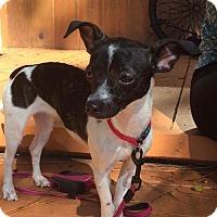 Adopt A Pet :: Ellie - S. Pasedena, FL