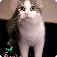 Adopt A Pet :: Sandra - Lancaster, PA