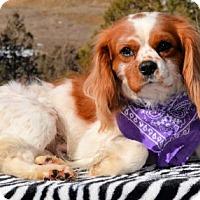 Adopt A Pet :: Pancho - Pueblo, CO
