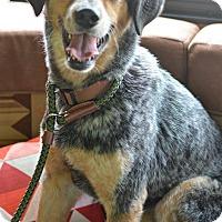 Adopt A Pet :: Riddick - Delano, MN