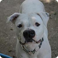 Adopt A Pet :: Chance - Ocoee, FL