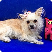 Adopt A Pet :: Zoey - Irvine, CA