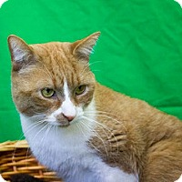Adopt A Pet :: Roonta - Gatineau, QC