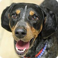 Adopt A Pet :: Annie - Mount Laurel, NJ