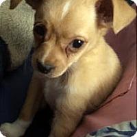 Adopt A Pet :: Conan - Buena Park, CA