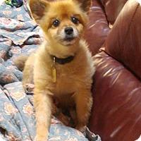 Adopt A Pet :: Tigger - Winfield, PA