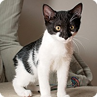 Adopt A Pet :: Pepper - Westminster, MD