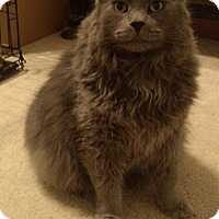 Adopt A Pet :: Rocky - Herndon, VA
