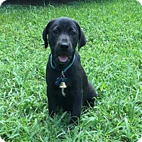 Adopt A Pet :: Garland - Houston, TX