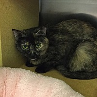 Adopt A Pet :: Josephine - Colmar, PA