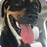 Adopt A Pet :: Kona - Homestead, FL