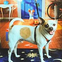 Adopt A Pet :: Tidbit - Elizabethtown, PA
