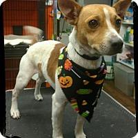 Adopt A Pet :: Ziggy - Eastman, GA