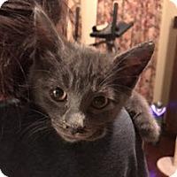 Adopt A Pet :: Harry - McKinney, TX