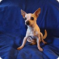 Adopt A Pet :: Bear - Pinehurst, NC