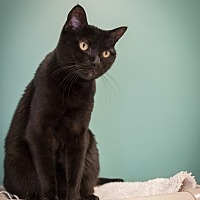 Adopt A Pet :: Maya - Houston, TX