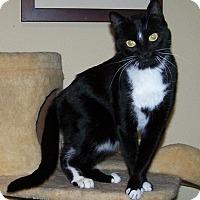 Adopt A Pet :: Whiskey - Las Vegas, NV