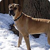 Adopt A Pet :: Percy - Phoenixville, PA
