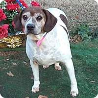 Beagle/Pointer Mix Dog for adoption in Woodstock, Georgia - Coco