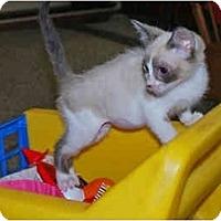 Adopt A Pet :: Miss Anna - Colmar, PA